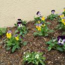 かわいい花壇になりました